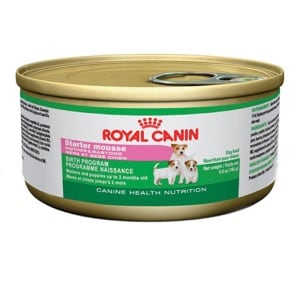 Royal Canin Chien Starter Mousse